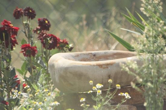 Permakultura, greenwashing azerowaste